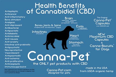 cbd for dogs announcing canna pet maximum cbd capsules the ultimate cannabidiol supplement for