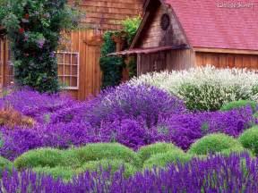lavendel garten eat live grow paleo herbs lavender
