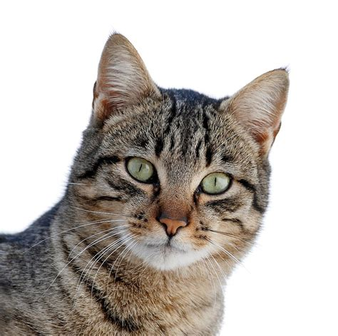 cat episodes alley cat allies denounces report exaggerating health threat from toxoplasmosis