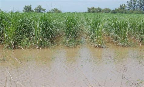 preguntas super intensas las intensas precipitaciones dejaron ca 241 averales con