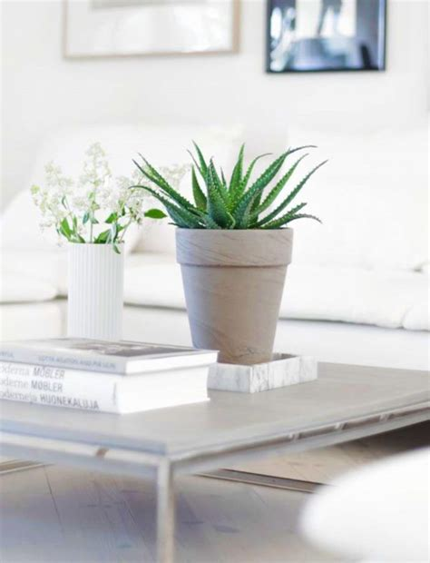 House Plants For Sale by 25 Best Ideas About House Plants For Sale On