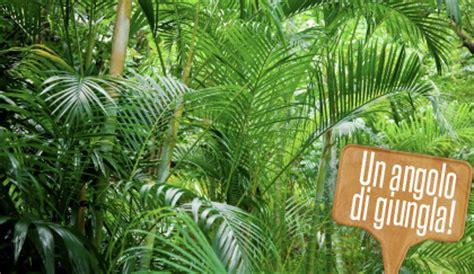 piante esotiche da giardino piante da interno esotiche che trasformano il salotto in
