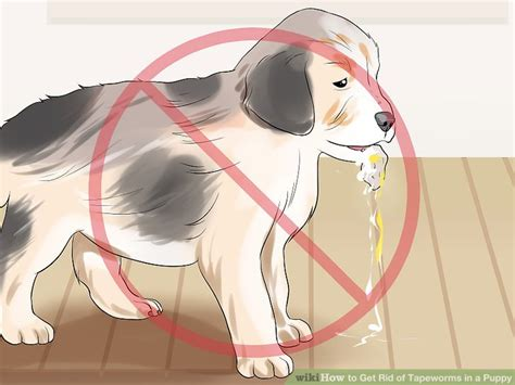 how to get rid of tapeworms in puppies how to get rid of tapeworms in a puppy 8 steps with pictures