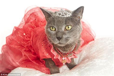 Dress Eye Catz a feline photographer throws 15 year cat a