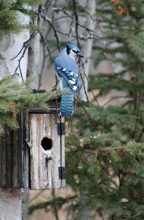 blue jay bird feeder woodworking projects plans