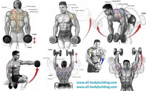 dumbbell exercises for shoulders shoulder exercises for