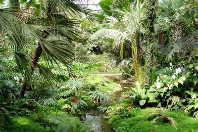 tropisches klima merkmale definition tropen