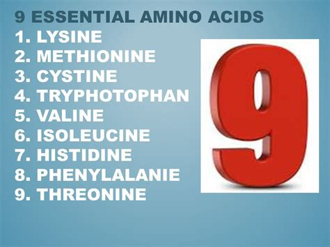 protein 8 essential amino acids protein ppt
