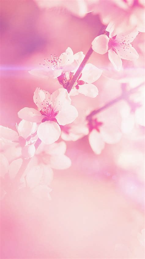 wallpaper iphone 6 tumblr pink pictures of flowers for cell phone flower backgrounds