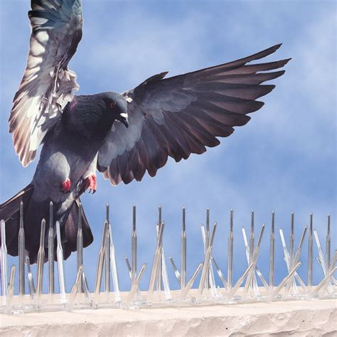 avian l for birds plastic bird spikes bird spikes plastic bird b gone