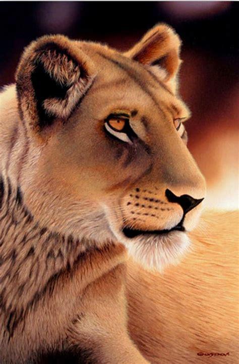 imagenes de leones al oleo cuadros modernos pinturas y dibujos animales salvajes
