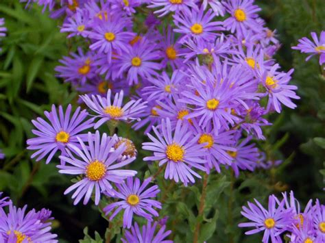 little plants top 10 plants for small gardens the english garden