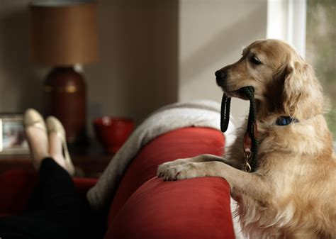 ways to keep dogs off couch 7 ways walking a dog can boost your health photo gallery