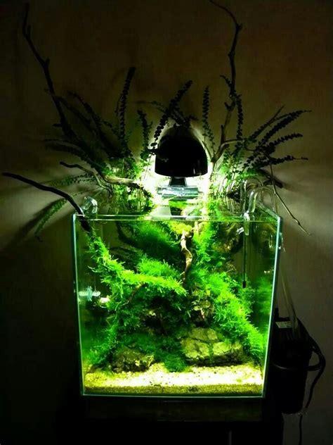 Nano Aquarium Pflanzen by Best 25 Nano Aquarium Ideas On Betta Tank