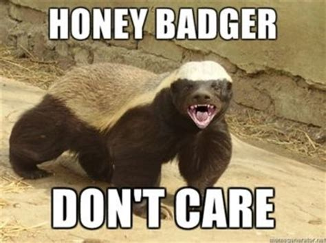 Badger Memes - honey badger know your meme