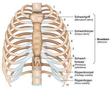 schmerzen im rechten bein beim liegen rippen funktion therapie diagnose behandlung anatomie