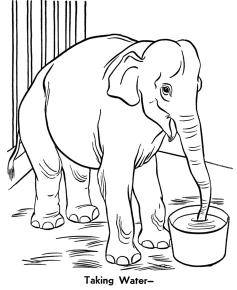 zoo coloring page to print zoo animal coloring pages zoo elephant coloring page and