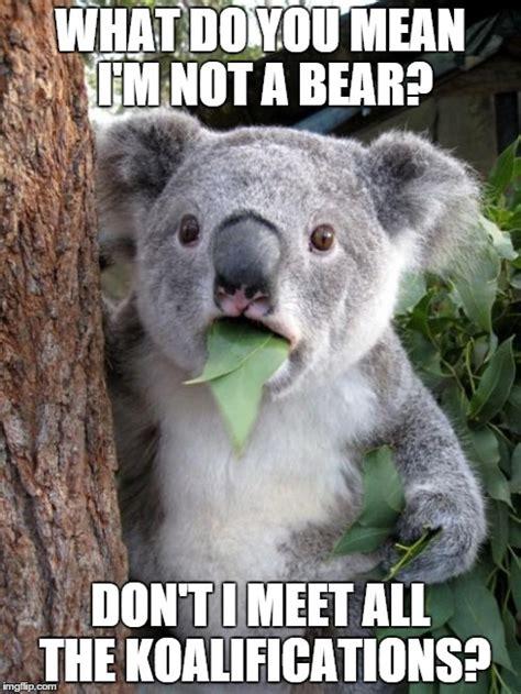 Koala Bear Meme - funny koala bear meme memes