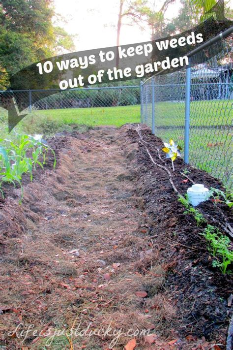 how to prevent weeds in vegetable garden 17 best images about backyard oasis ideas on