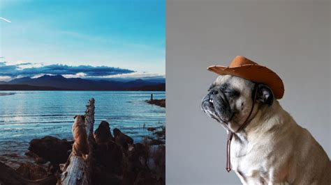 travel pug this pug will give you some travel goals here s why newsmobile