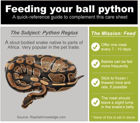 How Does It Take For A Snake To Shed infographic python feeding reptile