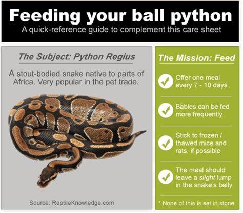 infographic ball python feeding reptile pinterest