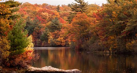 new fall colors climate change could shift new s fall foliage