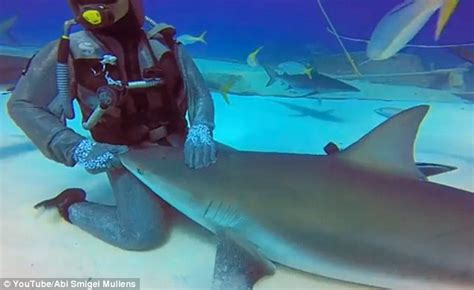 puppy shark image gallery keeping a pet shark