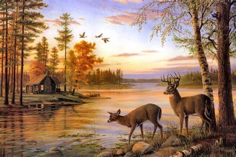 Deer Hunting Wall Murals india wallpapers page 2