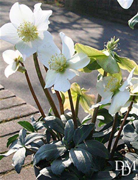 fiori meno costosi il balcone d inverno verde e bello dal nord al sud