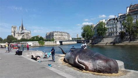 designboom paris whale installed on the river seine s banks by captain