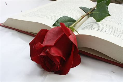 imagenes de rosas sobre libros 161 solicita un ramo de rosas en lysa flores para sant jordi