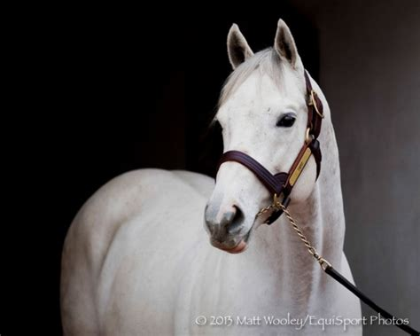 stud fees tapit s stud fee to for 2015 racing news paulick report