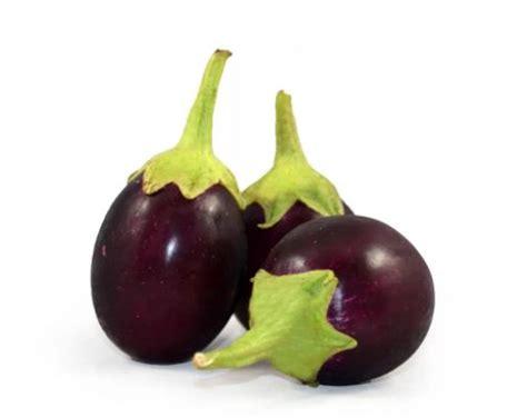 menanam terong bulat hijau  ungu  polybag