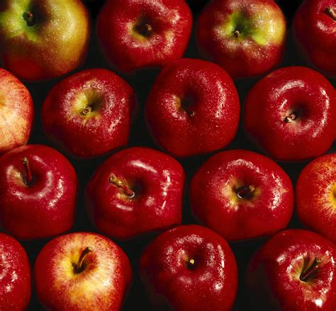 apple wallpapers real red apple wallpapers wallpaper cave
