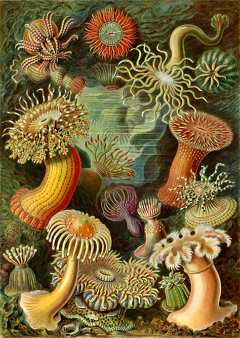 art forms in nature 3791319906 ernst haeckel art forms in nature margaret peot