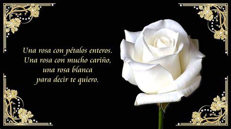 imagen de una hermosa rosa blanca para whatsapp te regalo una rosa blanca youtube