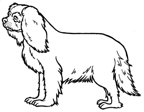coloring pages of cavalier king charles spaniels king charles spaniel lineart by hannahloulou on deviantart