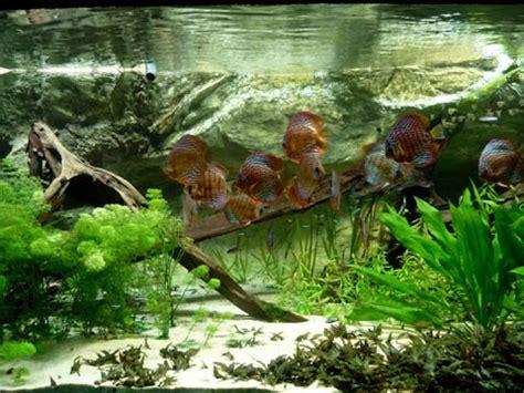 arredamento acquario guida allestimento di un acquario con tutorial