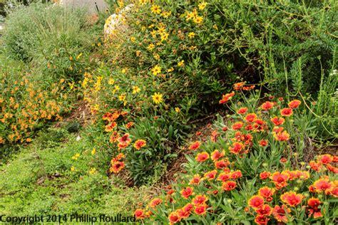native plants in san diego garden native tour 2015