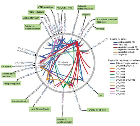 genome mapping berkeley lab researchers create of its gene map of sulfate reducing bacterium