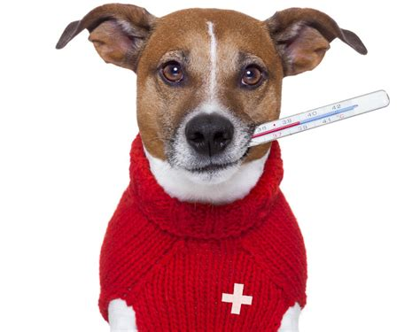 emergency puppy emergency care must supplies on bark and swagger bark and swagger