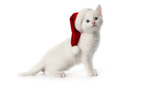 images of christmas cats free download christmas pets hd wallpapers in 1280x800
