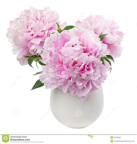 peonia in vaso fiori della peonia in vaso bianco fotografia stock