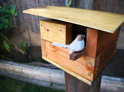 how to build a finch house how to build bird feeders plans bird cages