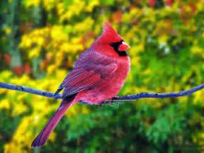 colorful bird pictures cool daily pics beautiful colorful birds