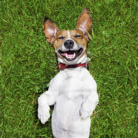 friendliest dogs renting with a friendly vs dogs allowed san diego movers