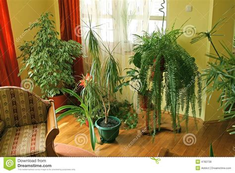 houseplants for rooms living room with green plants royalty free stock photos image 4782738
