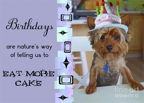 happy birthday yorkie images yorkie birthday decorations image inspiration of cake and birthday decoration
