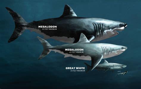 megalodon shark size megalodon sharkopedia